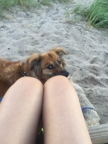 Beach and dogs, just wish there was more sun. But it is September